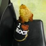 犬 Tシャツ【I Luv Rock】