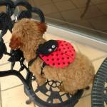 犬 リュック【Ladybug Backpack】