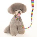 犬 首輪とリードセット【Contempo Rainbow】