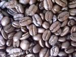 速達め~る便で送料無料!オーロラ農園コーヒー 200g(生豆時)