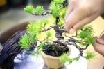 ■ お手持ちの盆栽の手入れをしよう!【盆栽教室】